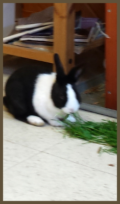 bunnie eating